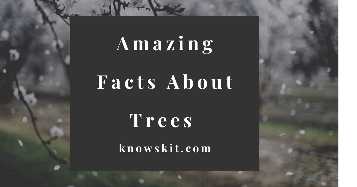 trees, save trees, about trees, what is tree, unique trees, facts about plants,facts about trees, amazing facts about trees, fun facts about trees.