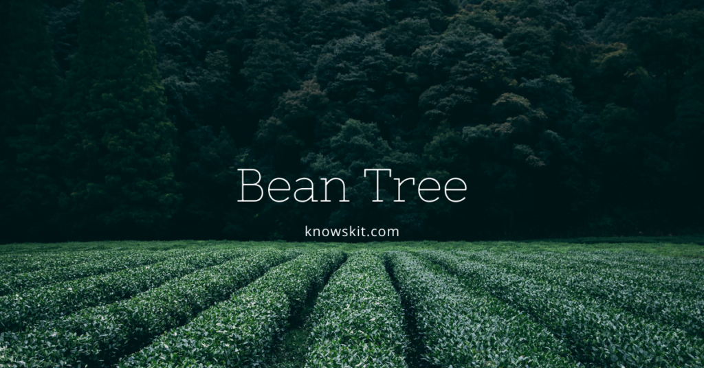 trees, save trees, about trees, what is tree,bean tree, tree bean, indian bean tree unique trees, facts about plants,facts about trees, amazing facts about trees, fun facts about trees.