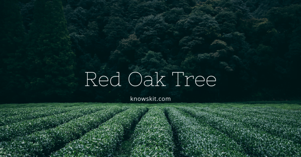 trees, red oak tree,save trees, about trees, what is tree, unique trees, facts about plants,facts about trees, amazing facts about trees, fun facts about trees.