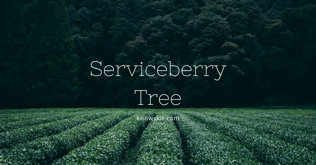 trees, save trees,serviceberry tree, about trees, what is tree, unique trees, facts about plants,facts about trees, amazing facts about trees, fun facts about trees.