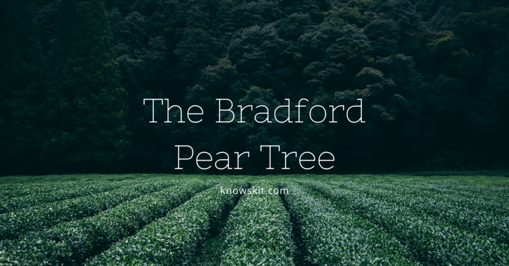 trees,bradford pear tree, save trees, about trees, what is tree, unique trees, facts about plants,facts about trees, amazing facts about trees, fun facts about trees.