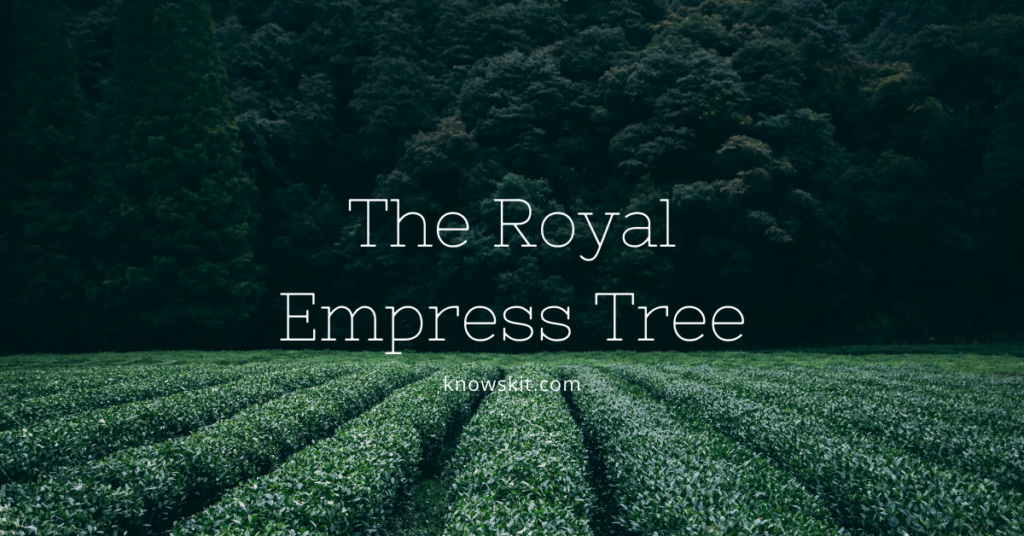 trees,royal empress tree, royal empress tree in india, save trees, about trees, what is tree, unique trees, facts about plants,facts about trees, amazing facts about trees, fun facts about trees.