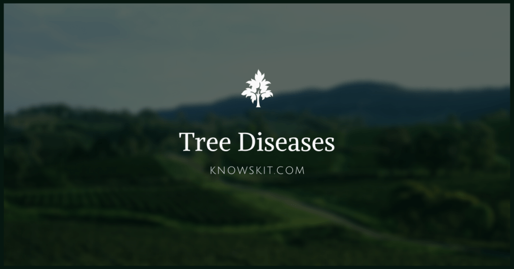 trees, Tree Diseases, save trees, about trees, what is tree, unique trees, facts about plants,facts about trees, amazing facts about trees, fun facts about trees.